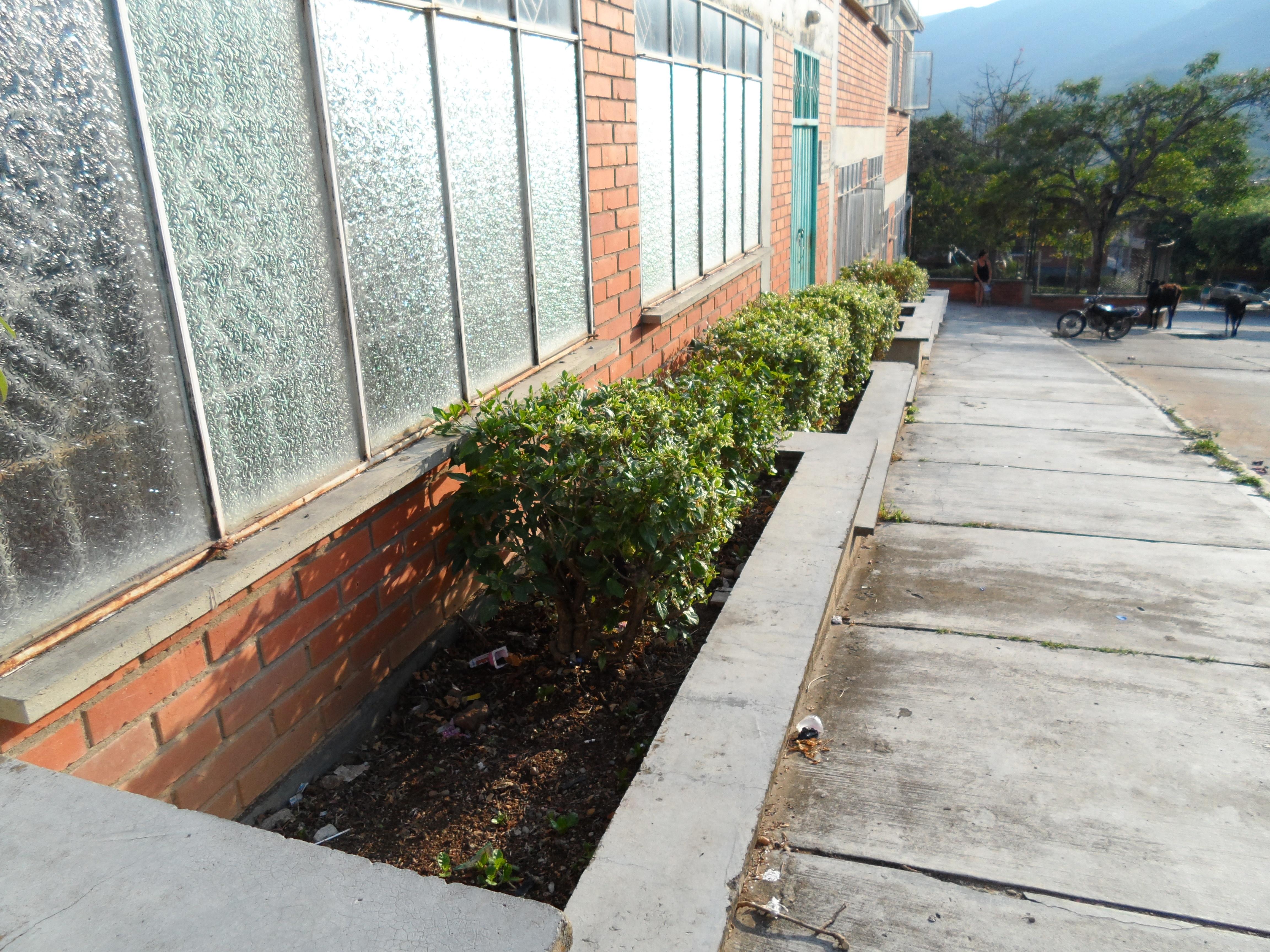 Arreglo de jardineras y podada sede c colegio luis - Imagenes de jardineras ...